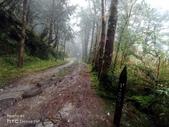 太平山山毛櫸步道:山毛櫸步道016-20201114.jpg