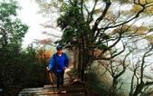太平山山毛櫸步道:山毛櫸步道105-20201114.jpg