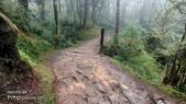 太平山山毛櫸步道:山毛櫸步道036-20201114.jpg