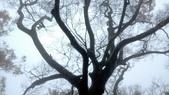 太平山山毛櫸步道:山毛櫸步道076-20201114.jpg