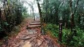 太平山山毛櫸步道:山毛櫸步道084-20201114.jpg