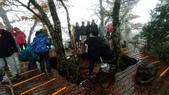 太平山山毛櫸步道:山毛櫸步道098-20201114.jpg