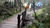 太平山山毛櫸步道:山毛櫸步道022-20201114.jpg
