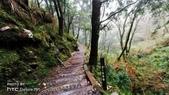 太平山山毛櫸步道:山毛櫸步道059-20201114.jpg