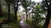 太平山山毛櫸步道:山毛櫸步道060-20201114.jpg