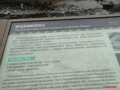 櫻花鉤吻鮭: