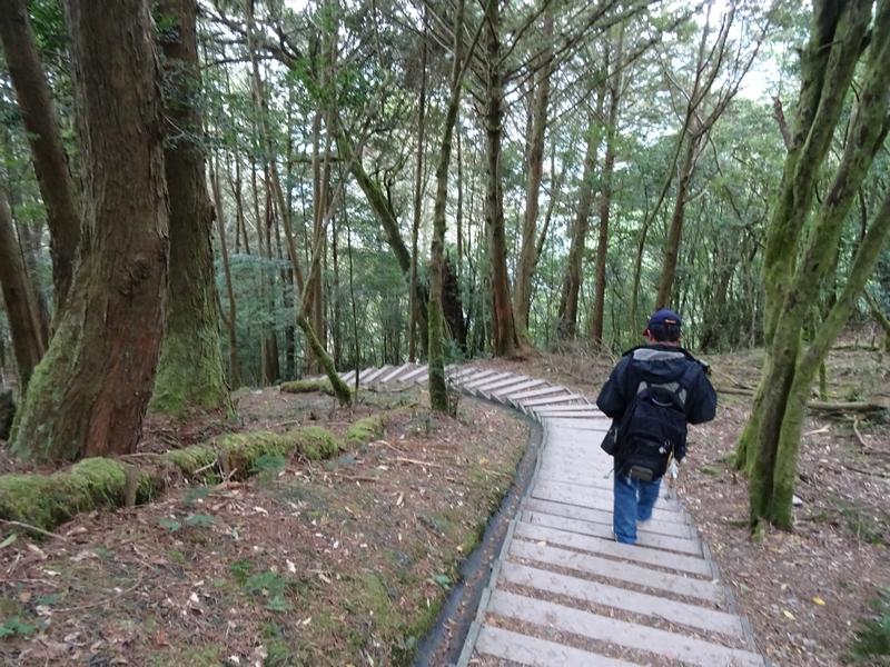 觀霧巨木步道:DSC02383.JPG