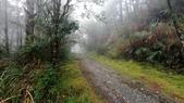 太平山山毛櫸步道:山毛櫸步道130-20201114.jpg