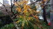 太平山山毛櫸步道:山毛櫸步道141-20201114.jpg