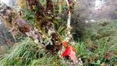 太平山山毛櫸步道:山毛櫸步道144-20201114.jpg