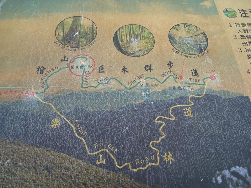 觀霧巨木步道:DSC02353.JPG