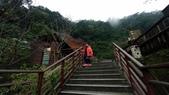 太平山山毛櫸步道:山毛櫸步道146-20201114.jpg