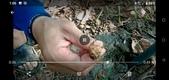 蟋蟀:061-20200830.jpg