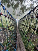 太平山山毛櫸步道:山毛櫸步道168-20201114.jpg