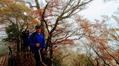 太平山山毛櫸步道:山毛櫸步道103-20201114.jpg