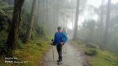 太平山山毛櫸步道:山毛櫸步道014-20201114.jpg