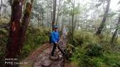 太平山山毛櫸步道:山毛櫸步道023-20201114.jpg