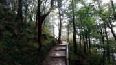 太平山山毛櫸步道:山毛櫸步道064-20201114.jpg