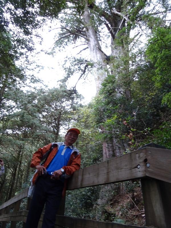 觀霧巨木步道:5-4.JPG