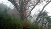 太平山山毛櫸步道:山毛櫸步道085-20201114.jpg