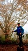太平山山毛櫸步道:山毛櫸步道086-20201114.jpg