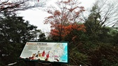 太平山山毛櫸步道:山毛櫸步道094-20201114.jpg