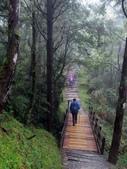 太平山山毛櫸步道:山毛櫸步道165-20201114.jpg