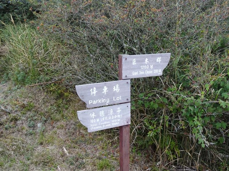 觀霧巨木步道:DSC02354.JPG