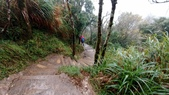 太平山山毛櫸步道:山毛櫸步道062-20201114.jpg
