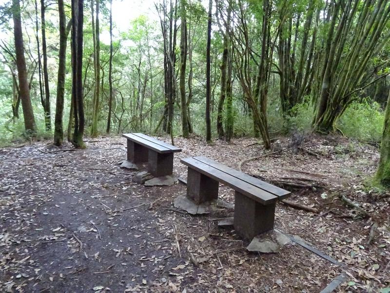 觀霧巨木步道:DSC02373.JPG