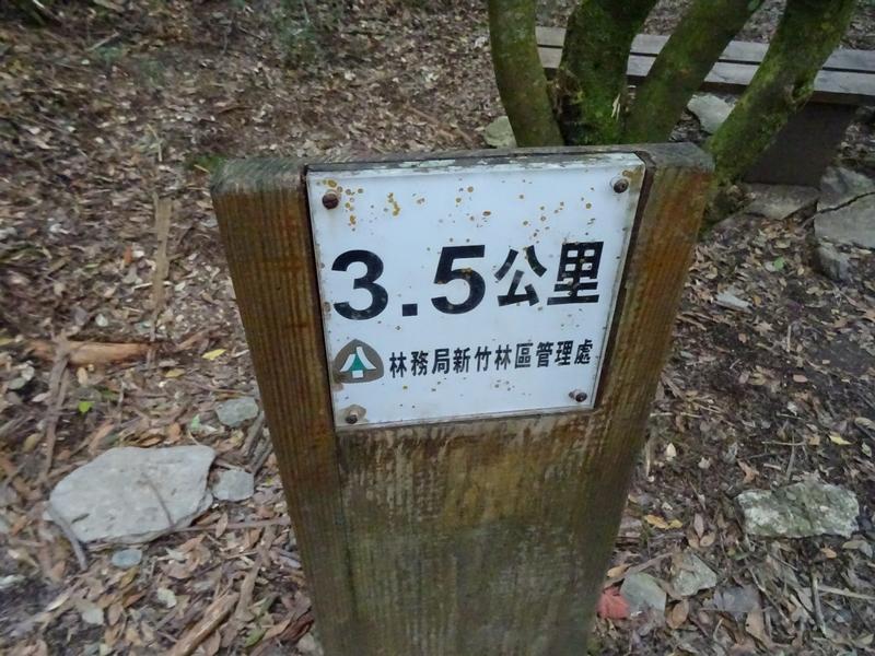 觀霧巨木步道:DSC02380.JPG