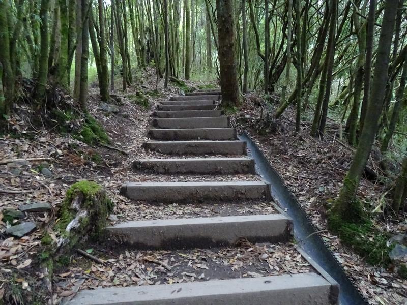 觀霧巨木步道:DSC02466.JPG
