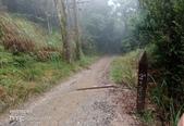 太平山山毛櫸步道:山毛櫸步道034-20201114.jpg