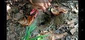 蟋蟀:060-20200830.jpg