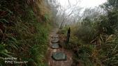 太平山山毛櫸步道:山毛櫸步道052-20201114.jpg