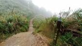 太平山山毛櫸步道:山毛櫸步道067-20201114.jpg