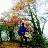 太平山山毛櫸步道:山毛櫸步道172-20201114.jpg