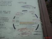 櫻花鉤吻鮭:鮭魚生活史
