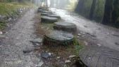 太平山山毛櫸步道:山毛櫸步道015-20201114.jpg