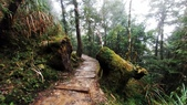 太平山山毛櫸步道:山毛櫸步道063-20201114.jpg