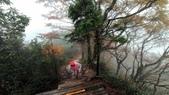 太平山山毛櫸步道:山毛櫸步道104-20201114.jpg