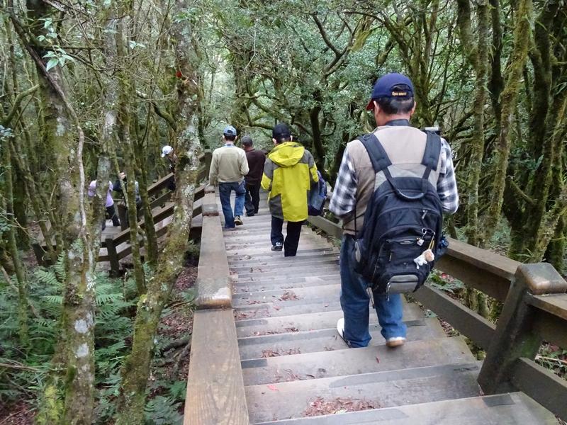 觀霧巨木步道:DSC02357.JPG