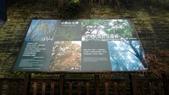 太平山山毛櫸步道:山毛櫸步道006-20201114.jpg