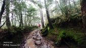 太平山山毛櫸步道:山毛櫸步道024-20201114.jpg