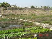 幫我們保護食物的橋頭阿媽:DSC00973