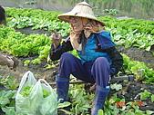 幫我們保護食物的橋頭阿媽:DSC00981