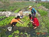 幫我們保護食物的橋頭阿媽:簡單的我們做