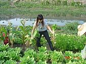 幫我們保護食物的橋頭阿媽:DSC00977