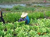 幫我們保護食物的橋頭阿媽:DSC00978