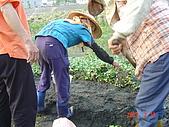 幫我們保護食物的橋頭阿媽:DSC00988
